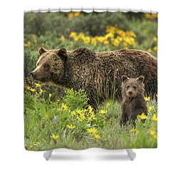 Grizzlies In The Wildflowers Shower Curtain