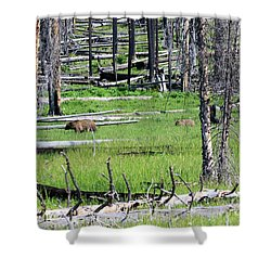 Grizzly Bear And Cub Cross An Area Of Regenerating Forest Fire Shower Curtain by Louise Heusinkveld