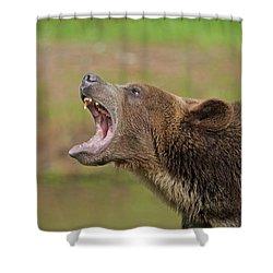 Grizzly Bear Growl Shower Curtain