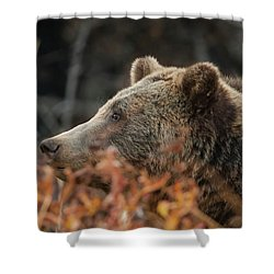 Grizzly Bear Portrait In Fall Shower Curtain