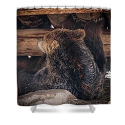 Grizzly Bear Under The Cabin Shower Curtain by Dan Pearce
