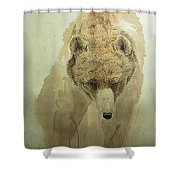 Grizzly Bear1 Shower Curtain