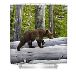Grizzly Cub Shower Curtain