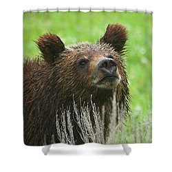Shower Curtain featuring the photograph Grizzly Cub by Steve Stuller