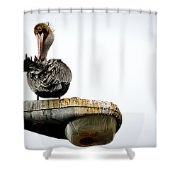 Shower Curtain featuring the photograph Grooming Time by AJ Schibig