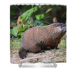 Groundhog  0590 Shower Curtain by Jack Schultz