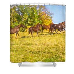 Group Of Morgan Horses Trotting Through Autumn Pasture. Shower Curtain