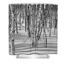 Group Of White Birches Shower Curtain