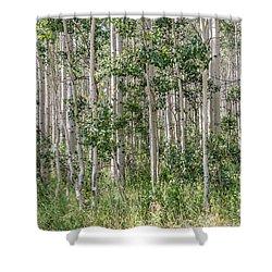 Grove Of Quaking Aspen Aka Quakies Shower Curtain