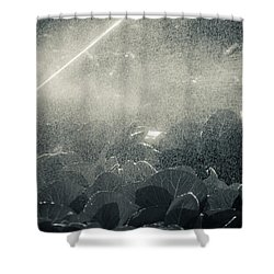 Growing Cabbage Shower Curtain by Scott Sawyer