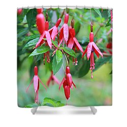 Shower Curtain featuring the photograph Growing In Red And Purple by Laddie Halupa