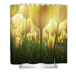 Growing  Tulips  Shower Curtain by Anastasy Yarmolovich