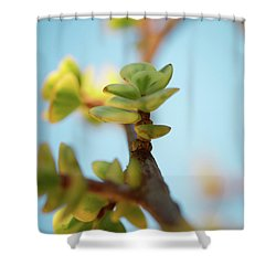 Shower Curtain featuring the photograph Growth by Ana V Ramirez