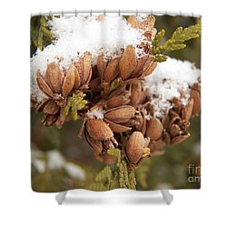 Growth Of Pincones Shower Curtain