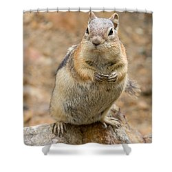 Grumpy Squirrel Shower Curtain