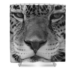 Grumpy Tiger  Shower Curtain