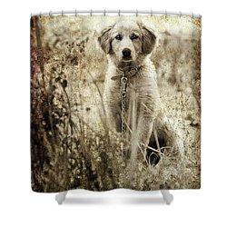 Grunge Puppy Shower Curtain