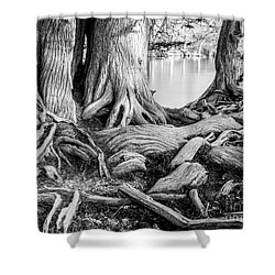 Guadalupe Bald Cypress In Black And White Shower Curtain