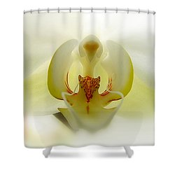 Shower Curtain featuring the photograph Guardian Angel by Blair Wainman