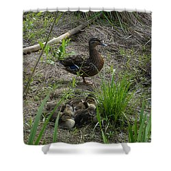 Shower Curtain featuring the photograph Guarding The Ducklings by Donald C Morgan