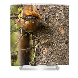 Shower Curtain featuring the photograph Guile by Aaron Whittemore