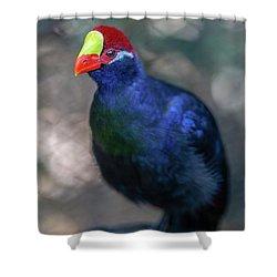 Guinea Hen Shower Curtain