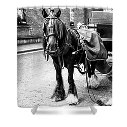 Guinness Horse Shower Curtain by John Rizzuto