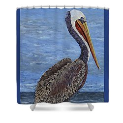Gulf Coast Brown Pelican Shower Curtain by Suzanne Theis