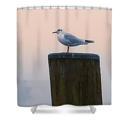 Gull And Fog Shower Curtain
