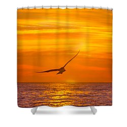 Gull At Sunrise Shower Curtain