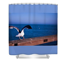 Gull Dance Shower Curtain