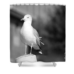 Gull In Black And White Shower Curtain
