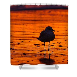 Gull Caught At Sunrise Shower Curtain by Allan Levin