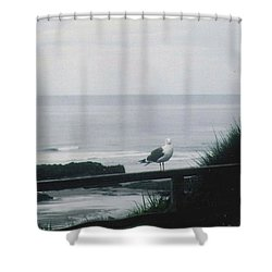 Shower Curtain featuring the photograph Gull On A Rail by Charles Robinson