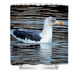 Gull On Winter's Pond  Shower Curtain