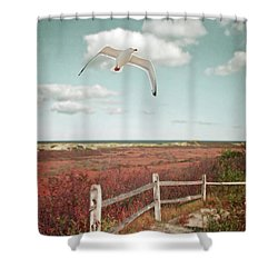Gull Over Provincelands Trail, Cape Cod Shower Curtain by Brooke T Ryan