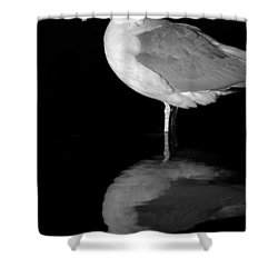 Gull Reflect Shower Curtain by Karol Livote