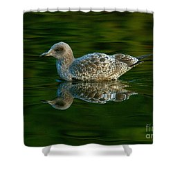 Shower Curtain featuring the photograph Gull Reflecting by Myrna Bradshaw