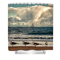 Gulls And Sails Shower Curtain