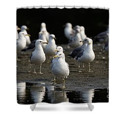 Gulls At The Beach Shower Curtain