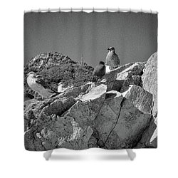 Shower Curtain featuring the photograph Gulls On Guard - Pt Mugu, California by Samuel M Purvis III