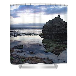 Shower Curtain featuring the photograph Gulls With Clouds by Lora Lee Chapman