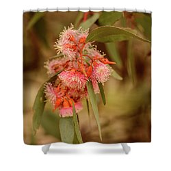 Shower Curtain featuring the photograph Gum Nuts 2 by Werner Padarin