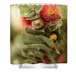 Gum Nuts Shower Curtain