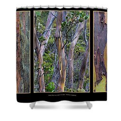 Gum Trees At Lake St Clair Shower Curtain by Werner Padarin