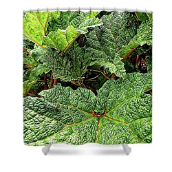 Gunnera Manicata Shower Curtain