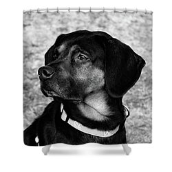 Gus - Black And White Shower Curtain