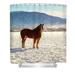 Gus Shower Curtain
