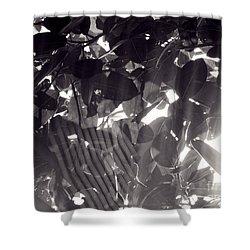Gv Spider Phenomena Shower Curtain by Megan Dirsa-DuBois