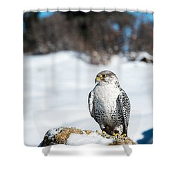 Gyrfalcon Shower Curtain